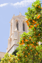 Dome of Cathedral of Tarragona with tangerines, Spain