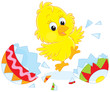 Newly hatched Easter Chick