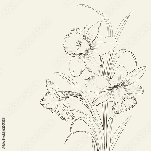 tied narcissus flowers isolated on white background