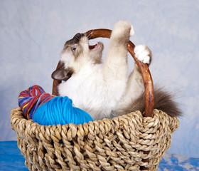 Katze im Wollkorb