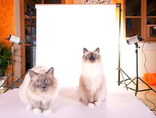 Fotoaufnahmen mit Katzen
