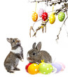 little rabbits and easter eggs isolated