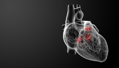 3d render Heart valve - side view