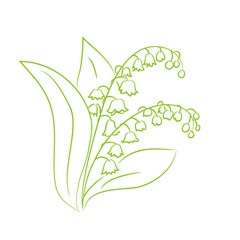 sketch of a flower lily of the valley