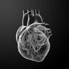 3d render Heart  - back view