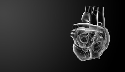 3d render Heart  - side view