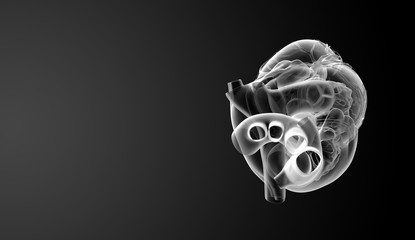 3d render Heart  - top view