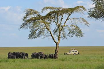 visite des parcs africains