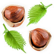 Hazelnut with leaves. Collection isolated on white