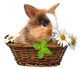 little rabbit in a basket with flowers