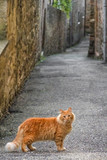 Red cat in a narrow alley looking at camera.