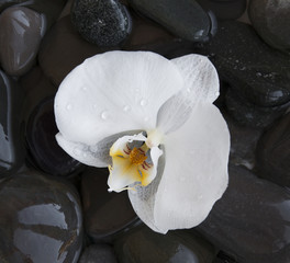 White orchid on a beach stones