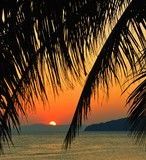 Sunset with palm leaves.