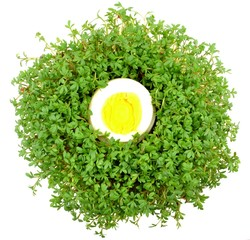 watercress with egg