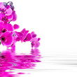floral background with orchids open reflection in water