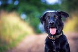 Fototapety dog portrait