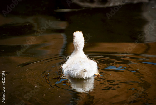 Cute yellow duckling in the water