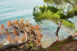 Beautiful branch of pine in shore on sea
