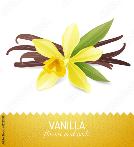 vanilla flower and pods