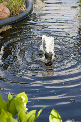 Teich im Garten, pond in a garden