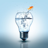 goldfish jumping out  electric bulb