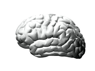 Brain model black and white on white background