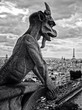 gargoyles on Notre Dame in Paris
