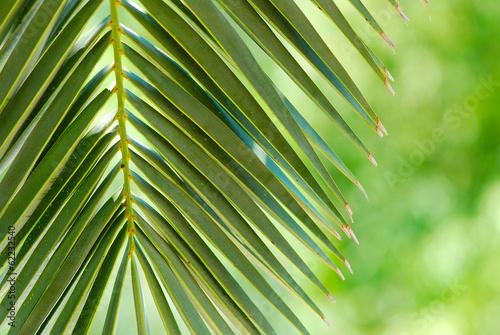 Aluminium Palm boom HOJA DE PALMERA, TROPICAL