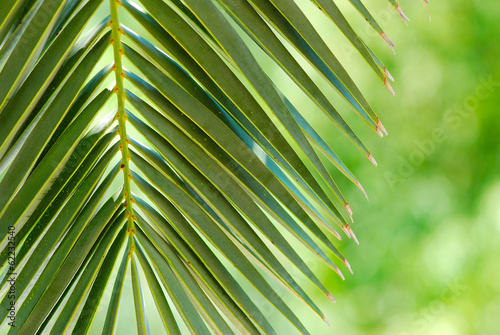Staande foto Palm boom HOJA DE PALMERA, TROPICAL