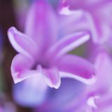 Hyacinth Grasp poster