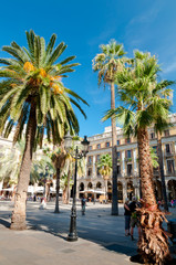 Palms in Plaza Reial at Barcelona