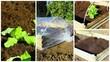 Obrazy na płótnie, fototapety, zdjęcia, fotoobrazy drukowane : montage,carré de potager et plantations