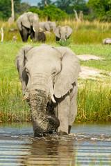 Elefant spritzt mit Wasser