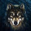 wolf front