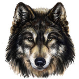 wolf head digital painting