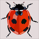 Ladybird isolated red