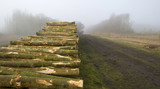 Woodpile near a forest in a foggy winter poster