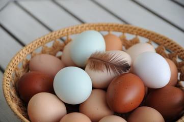 Eier mit Hühnerfeder