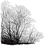 vector  trees without leaves. Hand drawn