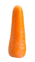 Big carrot on white background