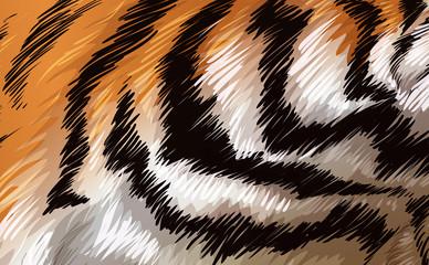 A tiger texture