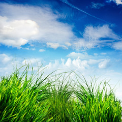 Frühlings-Hintergrund: Grünes Gras mit blauem Himmel :)