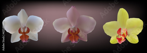 three orchids collection on dark background
