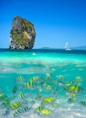 Beautiful landscape and underwater fish