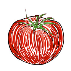Watercolor Tomato isolated on white