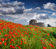 The ruins of the Genoese fortress with a field of blooming poppi