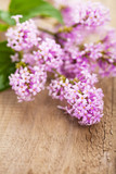lilac flowers over wooden background