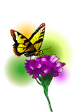 Colored illustration a butterfly and flower. Vector illustration
