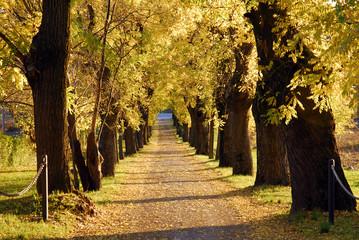 Paisaje de un camino de árboles.