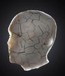 Shuttered head